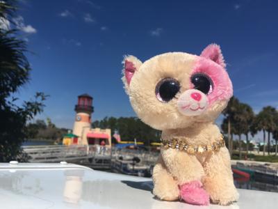 1a7b2f2d7d9 Beanie Boo Cats  Anabelle s Profile Page - Beanie Boo Fan Club