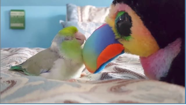 Beaks meets baby bird