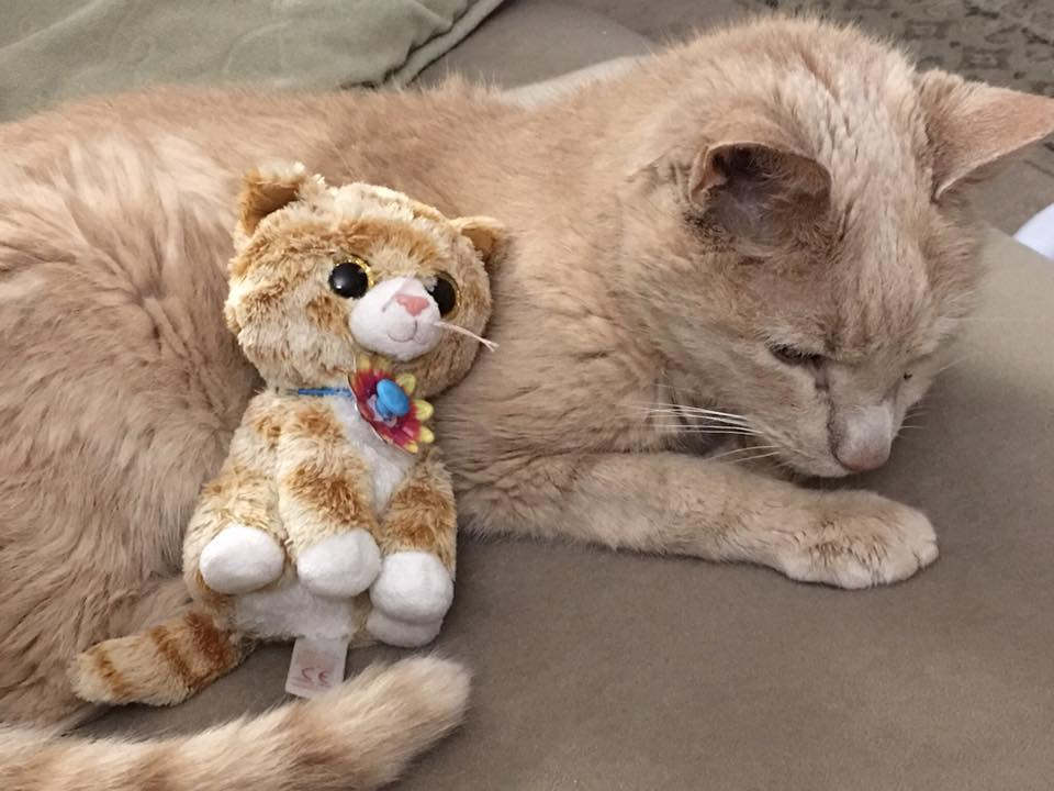 Do You Have a Beanie Boo That Looks Like Your Pet  b6b648cf83f